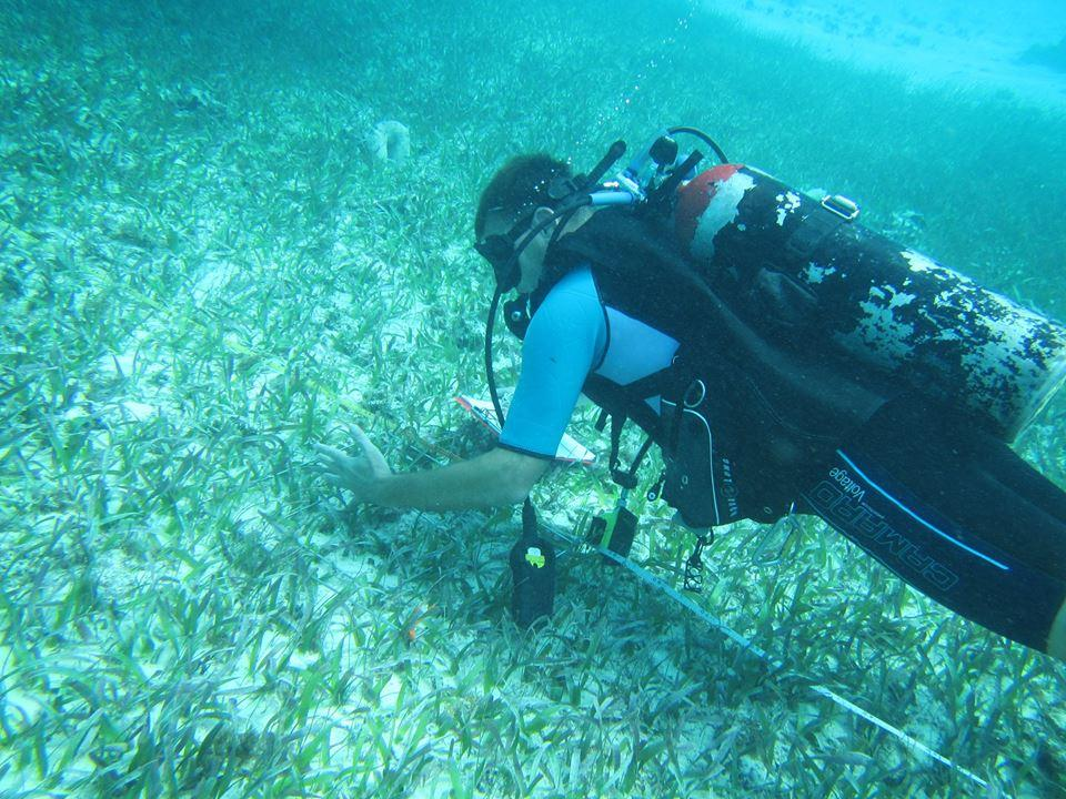 Projects Abroad volunteer is pictured diving and participating in data collection as part of his marine conservation work in Belize.